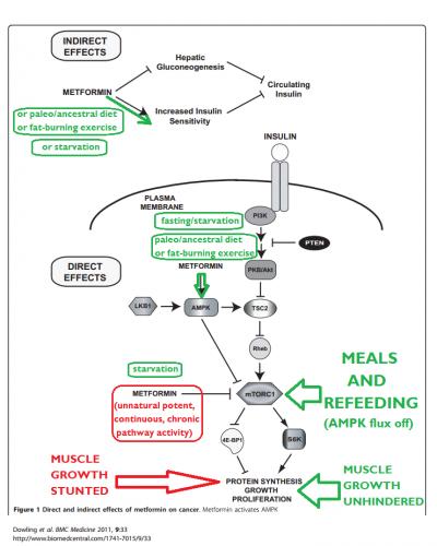 AMPK and insulin sensitivity