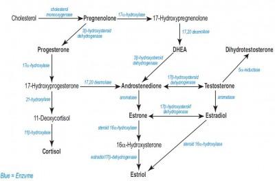 aromatase-steroid-hormone-synthesis