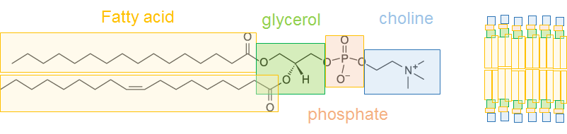 phospholids