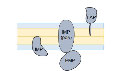 phospholids1