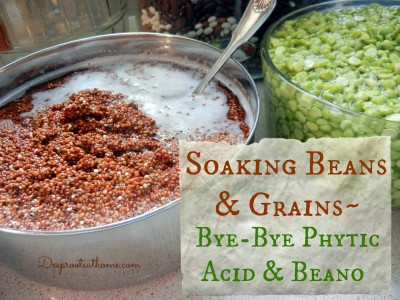 soaking-beans-grains