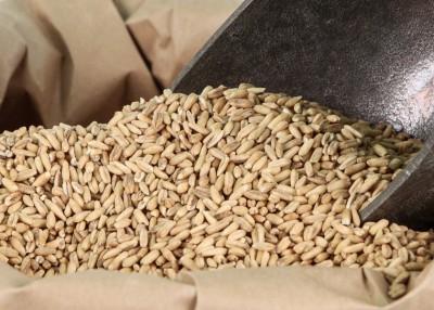 whole-oat-groats