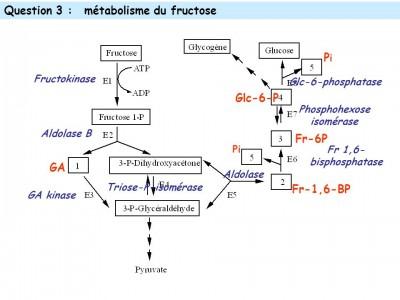 fructose-glicogen