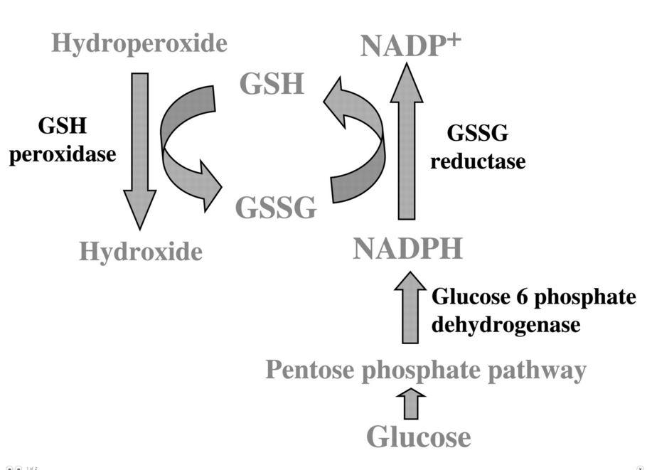 glutathione1