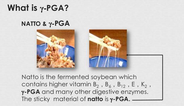 natto-gamma-PGA