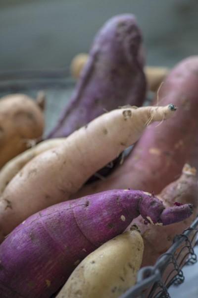sweet-potato-color