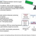 ROS-cell-signaling