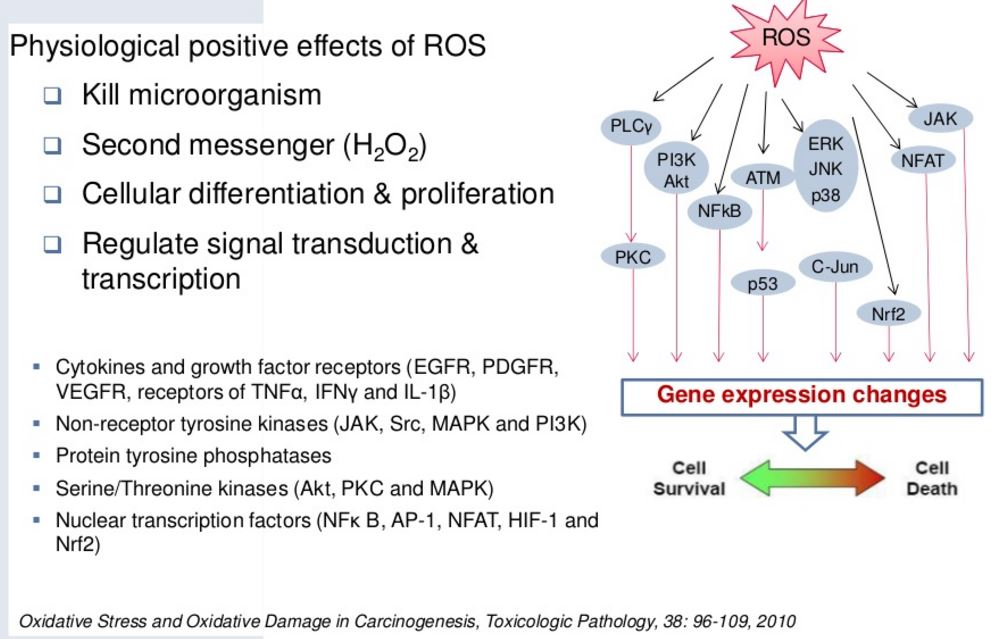 ROS-positive-effects