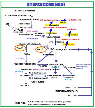 steroidogenesi