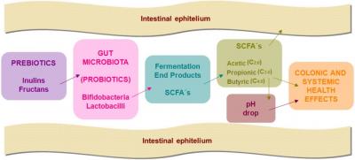 prebiotics_SCFA