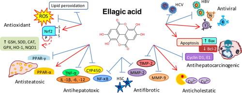 Elagic acid