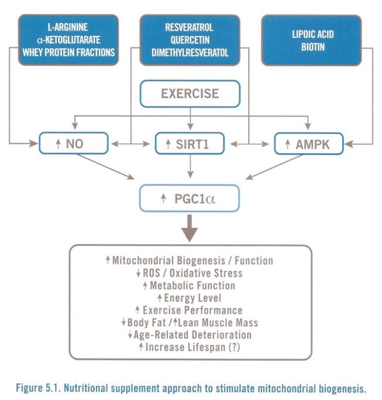 Mitochondrial-Biogenesis-Nutrients