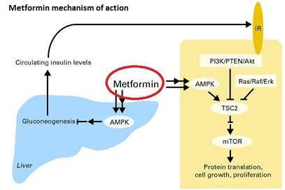 metformin1