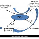 IGF_1