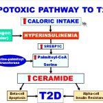 Lipotoxicity1