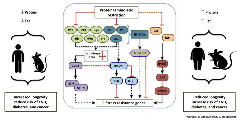 low_proteine